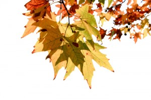4443autumn_leaves